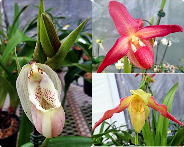 Orchids, The - Yes, We Can / I Will Call You / Go! Orchids, Go!